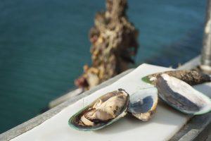 mussel-flesh-nz